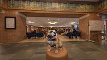 a bulldog standing on a platform with blue chairs behind