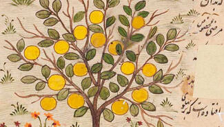A picture of fruit on a tree surrounded by Arabic calligraphy